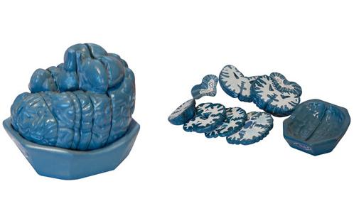 脑连续额状切面模型
