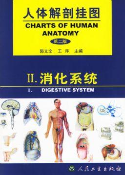 人体解剖挂图 消化系统