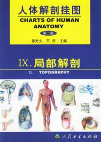 人体解剖挂图 局部解剖