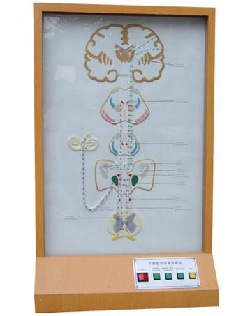 平衡觉传导电动模型