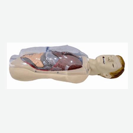 三腔二囊管训练模型