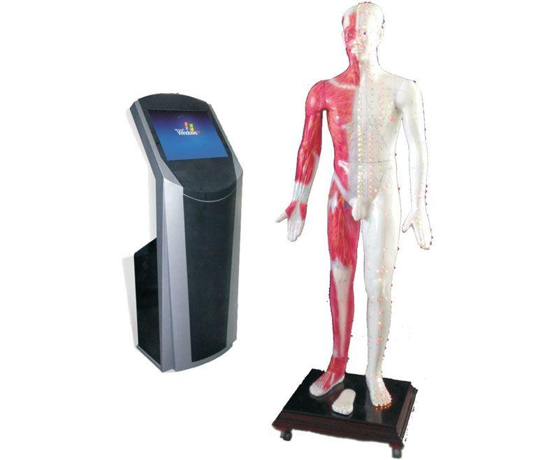 19寸多媒体人体针灸穴位交互数字平台