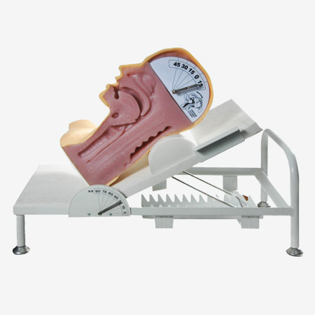 高级吞咽机制模型 吞咽与呼吸机制演示模型