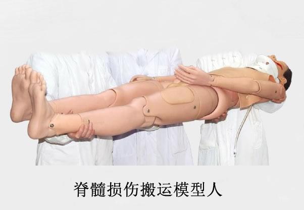 脊椎损伤搬运模型人