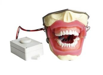 蜂鸣器麻醉拔牙模型