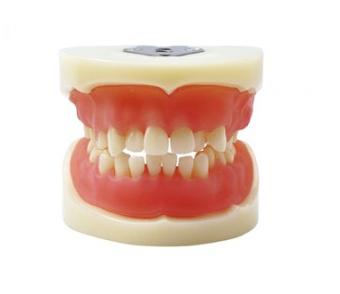 医师认证拔牙模型