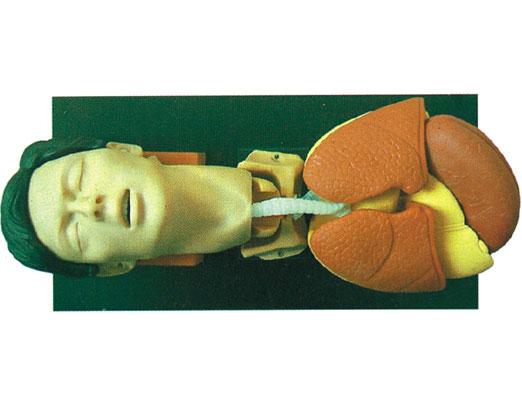成人气管插管训练仿真模型